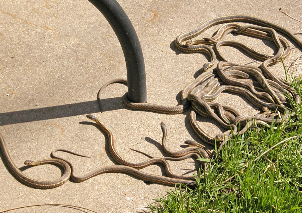 Snakes on patio