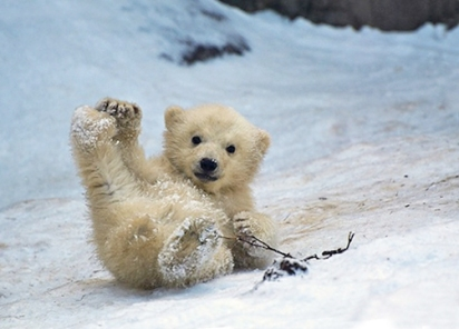 Cub sliding downhill
