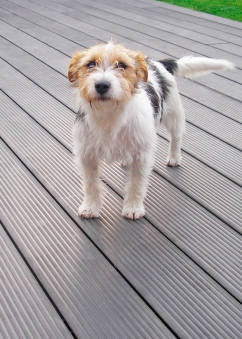 Dog_on_synthetic_deck